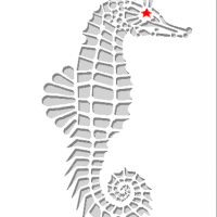 Seahorse with Red Star eye for Christmas season